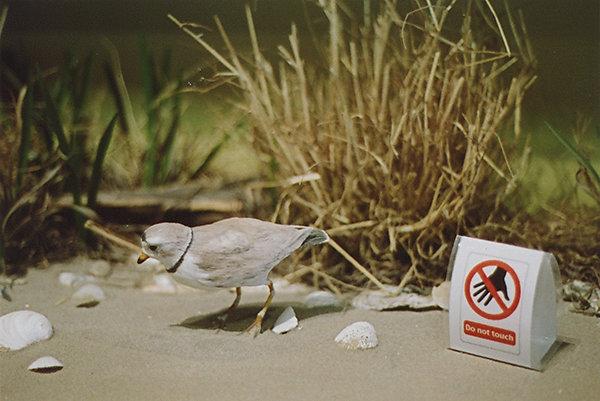 assateague-diorama-bird4site.jpg