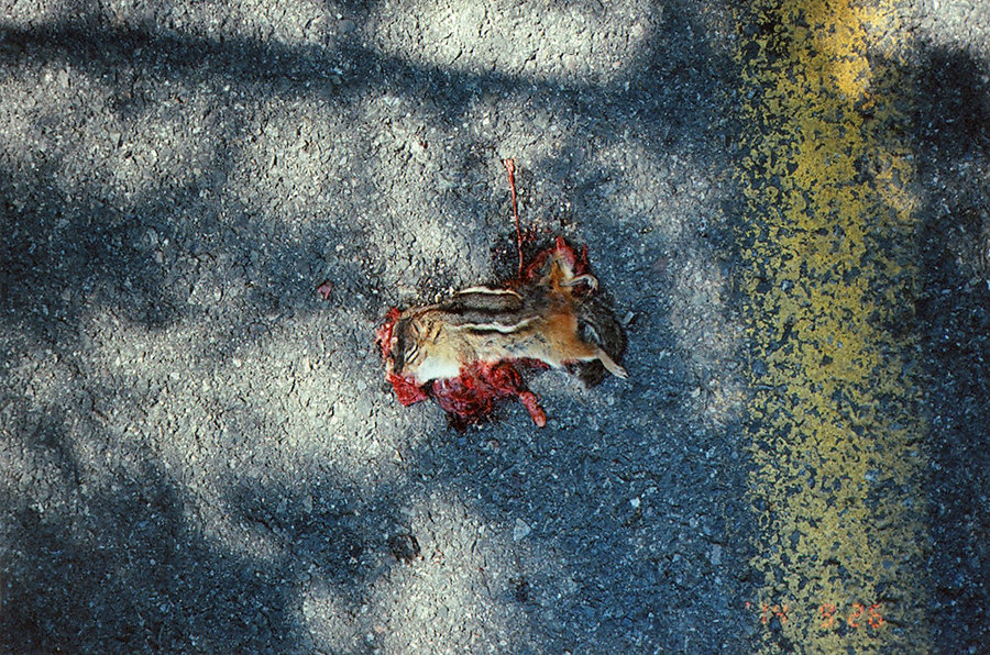 chipmunk-splat4site.jpg