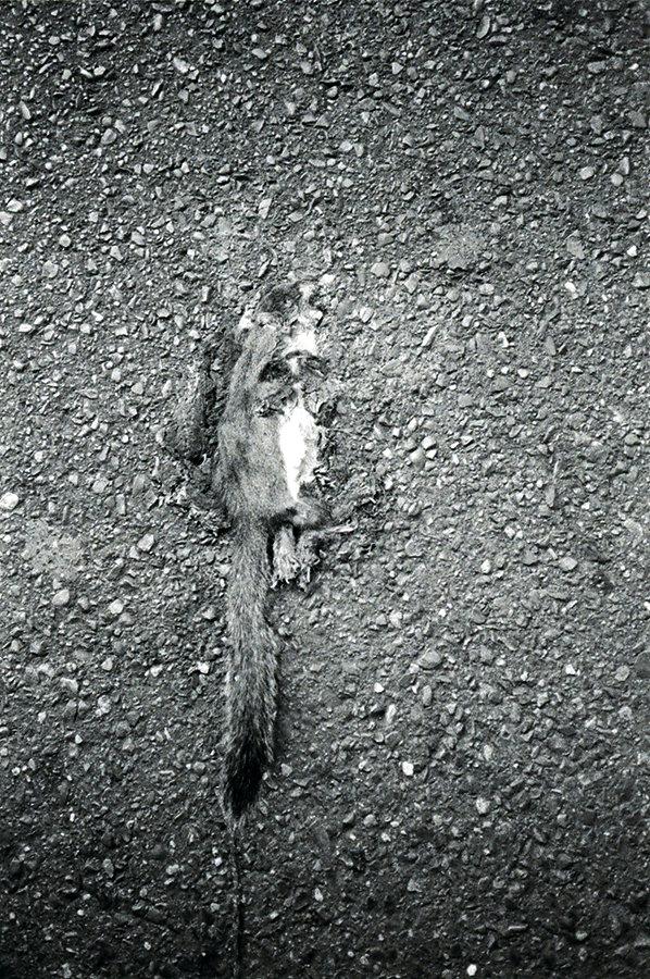 bienville-squirrel4site.jpg