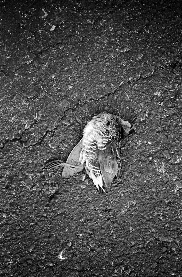 bennetts-parking-lot-bird-april20164site.jpg