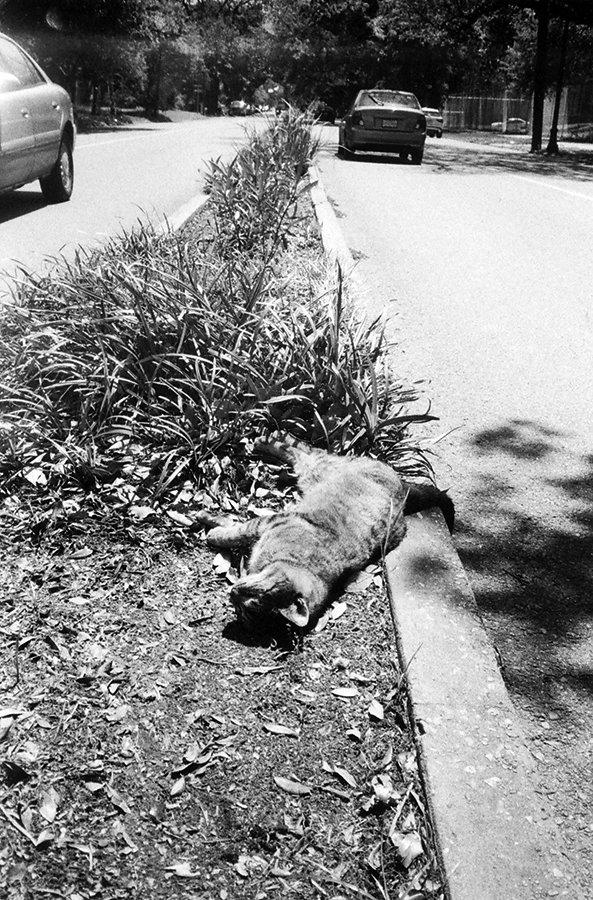 esplanade-cat-april-20164site.jpg