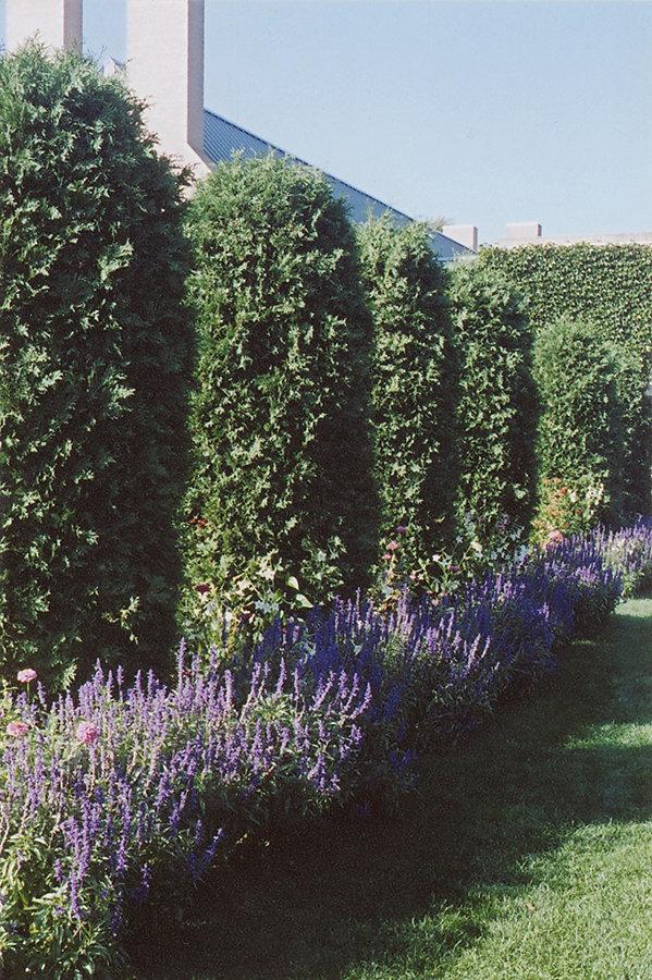 eastman-lavender4site.jpg